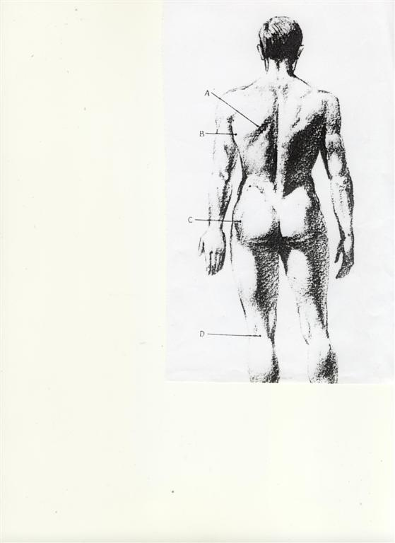 le-corps-humain-large.jpg